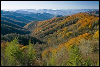 Vista of valley and mountains in fall foliage, morning, North Carolina. Great Smoky Mountains National Park, USA.
