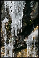 Icicles and rock, overnight frost, North Carolina. Great Smoky Mountains National Park, USA.