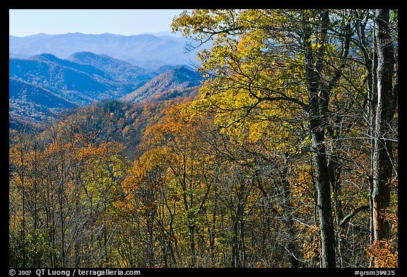 Trees in fall foliage and distant ridges from Newfound Gap road, North Carolina. Great Smoky Mountains National Park (color)