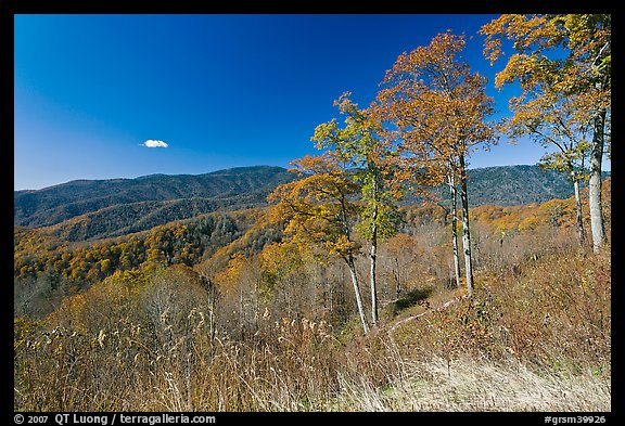 Trees in autumn foliage and mountain view, North Carolina. Great Smoky Mountains National Park, USA.