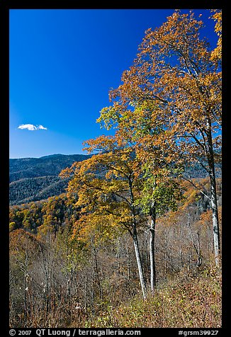 Trees in autumn colors and mountain vista, North Carolina. Great Smoky Mountains National Park (color)