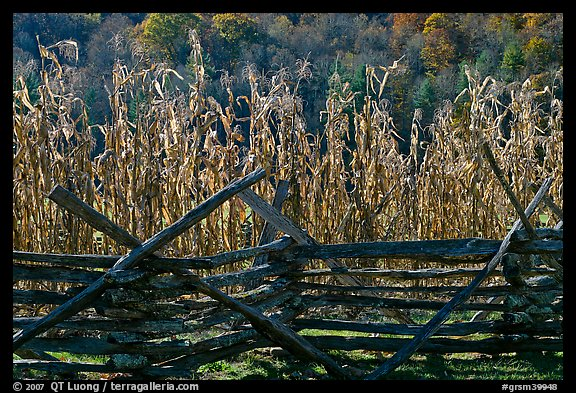 Fence and corn, Oconaluftee Mountain Farm, North Carolina. Great Smoky Mountains National Park (color)