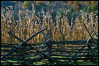 Fence and corn, Oconaluftee Mountain Farm, North Carolina. Great Smoky Mountains National Park, USA. (color)