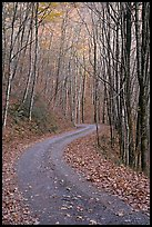 Unpaved Balsam Mountain Road in autumn forest, North Carolina. Great Smoky Mountains National Park, USA.