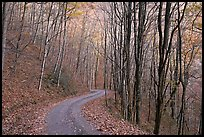 Unpaved road in fall forest, Balsam Mountain, North Carolina. Great Smoky Mountains National Park, USA.