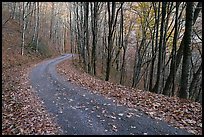 Balsam Mountain Road in autumn forest, North Carolina. Great Smoky Mountains National Park, USA. (color)