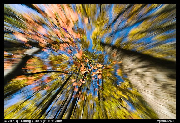 Motion zoom effect, forest in fall foliage, Tennessee. Great Smoky Mountains National Park (color)