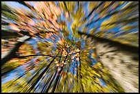Motion zoom effect, forest in fall foliage, Tennessee. Great Smoky Mountains National Park, USA.