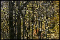 Twisted dark trees and sunny forest in fall, Tennessee. Great Smoky Mountains National Park, USA.