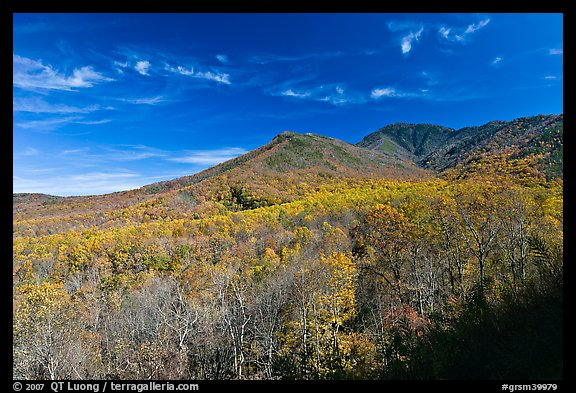 Slopes and hills in fall foliage with mountain behind, Tennessee. Great Smoky Mountains National Park (color)