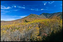 Slopes and hills in fall foliage with mountain behind, Tennessee. Great Smoky Mountains National Park ( color)