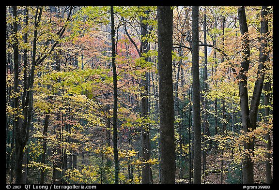 Forest scene in autumn, Tennessee. Great Smoky Mountains National Park (color)