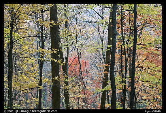 Forest with fall foliage, Tennessee. Great Smoky Mountains National Park (color)