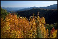 Trees in fall colors and backlit hillside near Newfound Gap, Tennessee. Great Smoky Mountains National Park ( color)