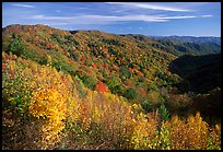 Hillsides covered with trees in autumn color near Newfound Gap, afternoon, North Carolina. Great Smoky Mountains National Park, USA.