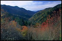 Valley covered with trees in late autumn, Morton overlook, Tennessee. Great Smoky Mountains National Park, USA.