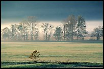 Meadow, trees, and fog, early morning, Cades Cove, Tennessee. Great Smoky Mountains National Park, USA. (color)