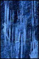 Icicles on rock face, Tennessee. Great Smoky Mountains National Park, USA. (color)