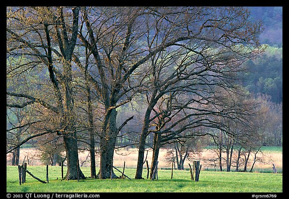 Trees in fenced meadow, early spring, Cades Cove, Tennessee. Great Smoky Mountains National Park (color)