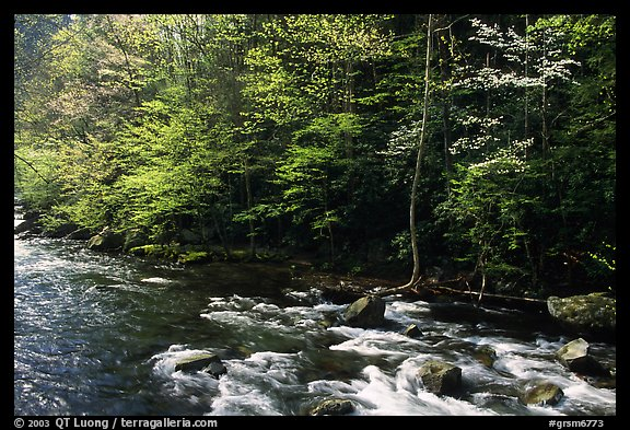 Sunlit Little River in the spring, early morning, Tennessee. Great Smoky Mountains National Park (color)