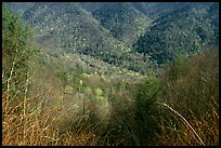 Shrubs and hillside, North Carolina. Great Smoky Mountains National Park ( color)