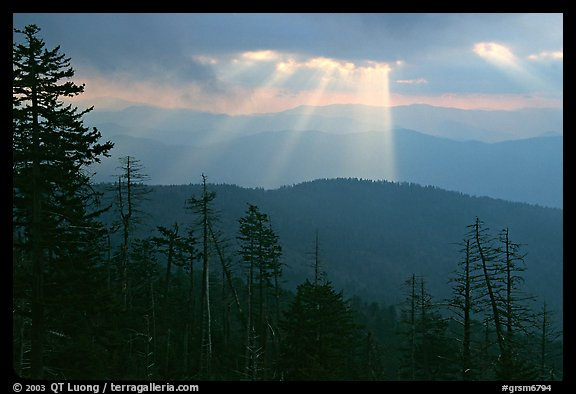 Silhouetted trees and God's rays from Clingmans Dome, early morning, North Carolina. Great Smoky Mountains National Park (color)