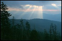 Silhouetted trees and God's rays from Clingmans Dome, early morning, North Carolina. Great Smoky Mountains National Park, USA. (color)