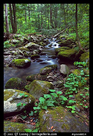 Mossy boulders and Cosby Creek, Tennessee. Great Smoky Mountains National Park (color)