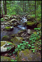 Mossy boulders and Cosby Creek, Tennessee. Great Smoky Mountains National Park, USA. (color)