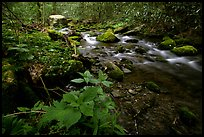 Cosby Creek, Tennessee. Great Smoky Mountains National Park, USA.