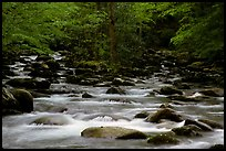 Middle Prong of the Little Pigeon River, Tennessee. Great Smoky Mountains National Park, USA. (color)