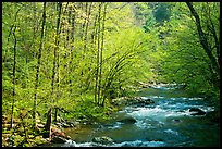 Middle Prong of the Little River in the sun, Tennessee. Great Smoky Mountains National Park, USA.