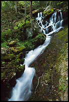 Small cascading stream, Treemont, Tennessee. Great Smoky Mountains National Park, USA. (color)