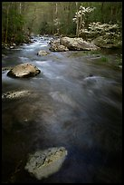 Flowing water, Middle Prong of the Little River, Tennessee. Great Smoky Mountains National Park, USA. (color)