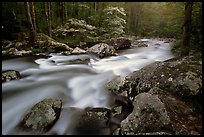 Middle Prong of the Little River flowing past dogwoods, Tennessee. Great Smoky Mountains National Park, USA. (color)
