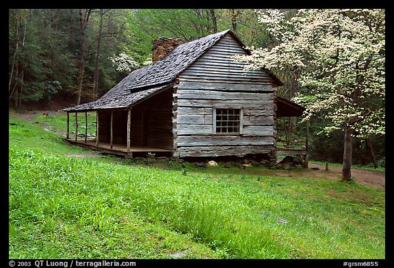 Noah Ogle Farm and dogwood tree in bloom, Tennessee. Great Smoky Mountains National Park, USA.
