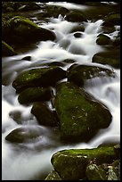 Stream flowing over mossy boulders, Roaring Fork, Tennessee. Great Smoky Mountains National Park, USA.