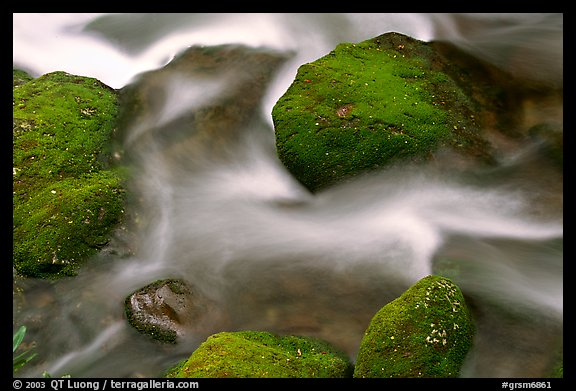 Mossy boulders and flowing water, Roaring Fork River, Tennessee. Great Smoky Mountains National Park, USA.