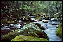 River cascading along mossy boulders, Roaring Fork, Tennessee. Great Smoky Mountains National Park, USA.