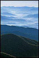 Hazy Ridges seen from Clingmans Dome, North Carolina. Great Smoky Mountains National Park ( color)