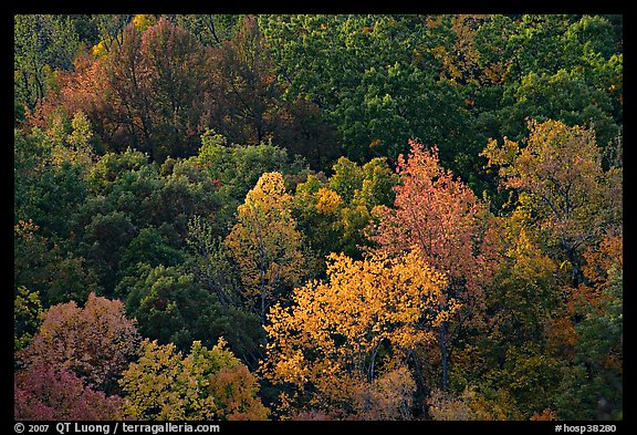 Trees in fall color on hillside. Hot Springs National Park, Arkansas, USA.