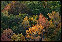 Trees in fall color on hillside. Hot Springs National Park, Arkansas, USA. (color)