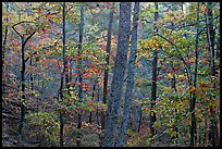 Forest in autumn colors, West Mountain. Hot Springs National Park, Arkansas, USA.