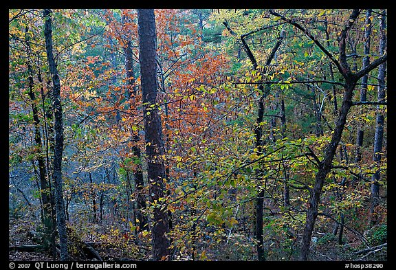 Deciduous trees in fall colors, West Mountain. Hot Springs National Park (color)
