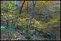 Trees in fall foliage, Gulpha Gorge. Hot Springs National Park, Arkansas, USA.