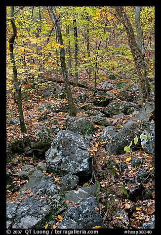Boulders and trees in fall foliage, Gulpha Gorge. Hot Springs National Park (color)