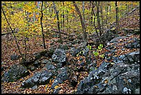 Boulders and trees in fall colors, Gulpha Gorge. Hot Springs National Park, Arkansas, USA. (color)
