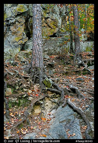 Roots and trees in forest, Gulpha Gorge. Hot Springs National Park, Arkansas, USA.