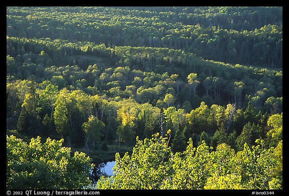 Forest seen  from Mount Franklin. Isle Royale National Park (color)