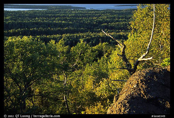 View over forests from Mount Franklin. Isle Royale National Park (color)